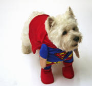 th_480585769_Superdog_by_Louisetheloser_122_936lo.jpg